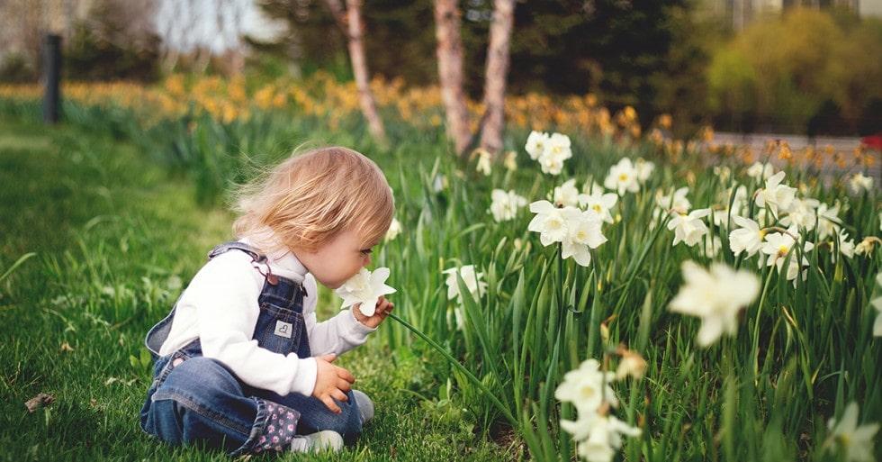tippek pollenallergia ellen